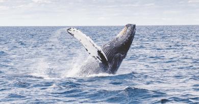 Protéger les baleines pour sauver la planète - Le blog du hérisson