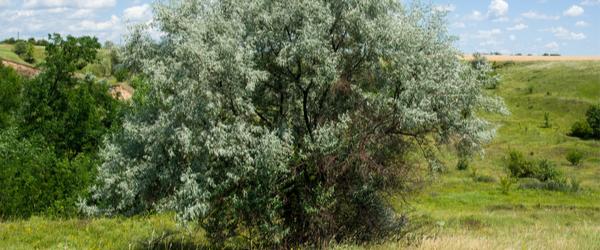 Entretien des arbustes de son jardin - Le blog du hérisson