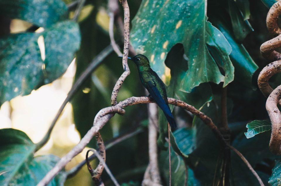 Costa Rica – au cœur de la réserve Monteverde «Cloud Forest»
