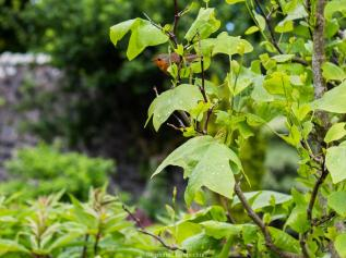 Le jardin clos de Dunvegan