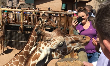 Best 3 Kid-Friendly STEM Things To Do in Denver, Colorado For Toddlers