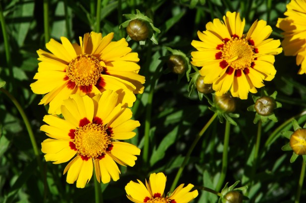 fleurs2011
