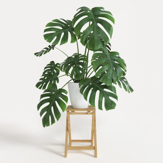 Si vas a decorar tu hogar, no pueden faltar estas plantas en tu listado de compras. Renovarán el aire de tu hogar.