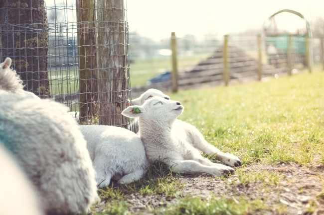 Recuperemos el pastoreo extensivo 4-min