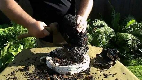 Чага целебные свойства приготовление настоя из гриба