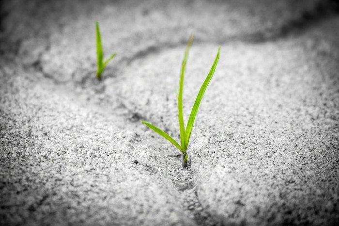 Résilience, apprendre des réussites comme des échecs et persévérer