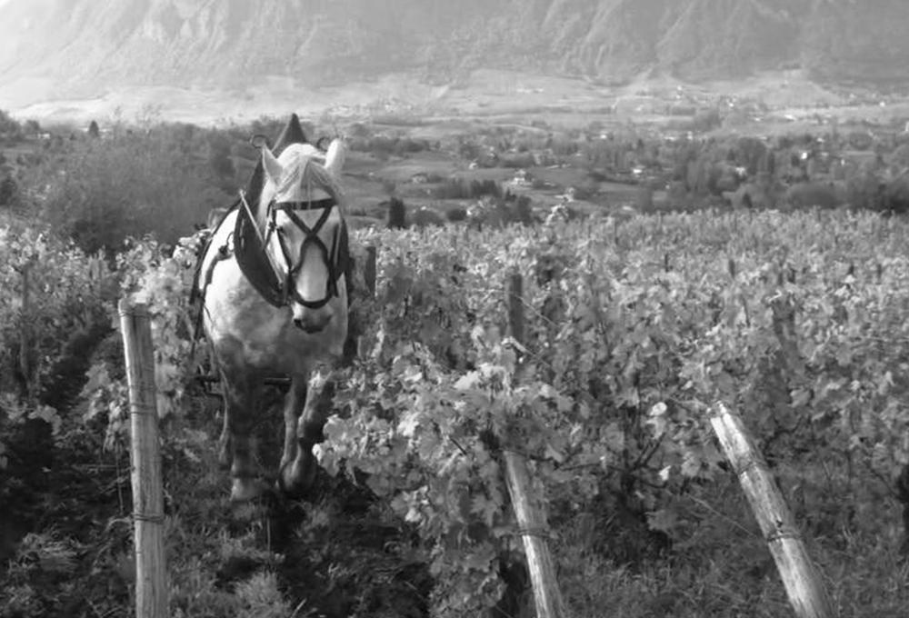 Bio Biodynamie et vins naturels