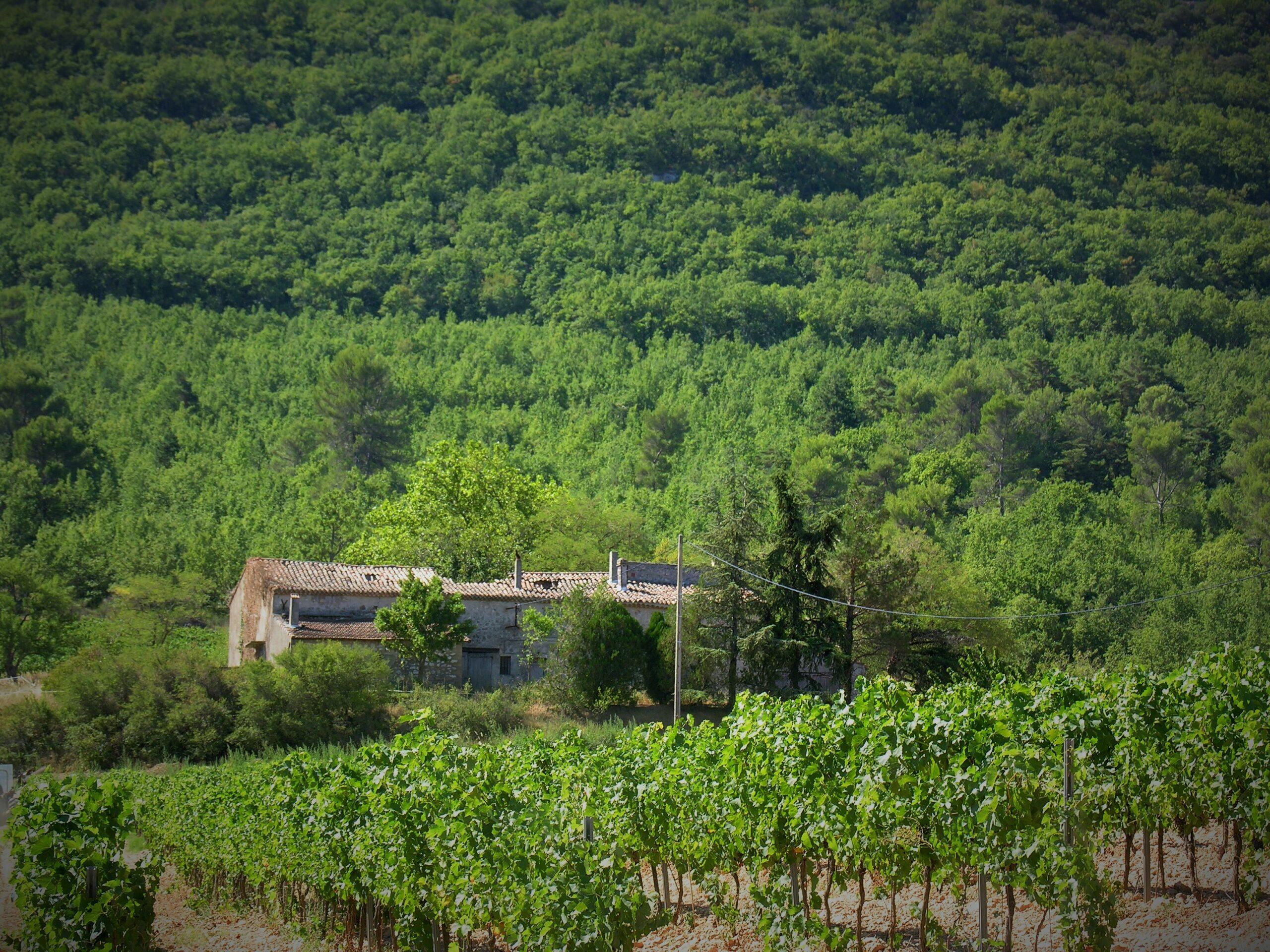 La Mongestine Provence