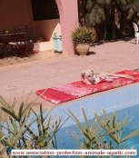 association-protection-animale-agadir-taghazout-02
