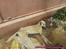 association-protection-animale-agadir-taghazout-03