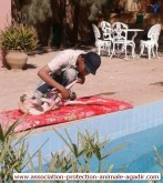 association-protection-animale-agadir-taghazout-09