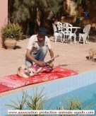 association-protection-animale-agadir-taghazout-10