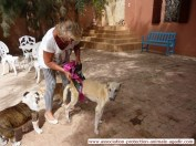 association-protection-animale-agadir-taghazout-16