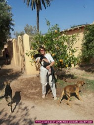 association-protection-animale-agadir-31