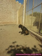 association-protection-animale-agadir-34