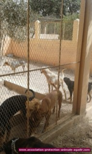 association-protection-animale-agadir-68