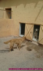association-protection-animale-agadir-71