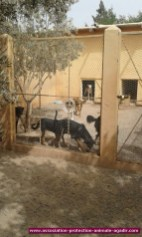association-protection-animale-agadir-78