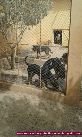 association-protection-animale-agadir-80