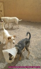 association-protection-animale-agadir-83