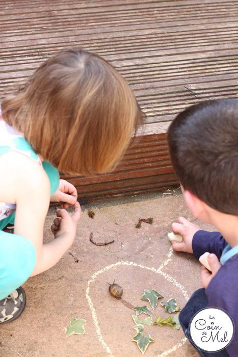 Making a Play Area for Worms and Snails