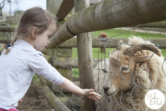 How to Make the Most of your Day at Willows Activity Farm - Feeding