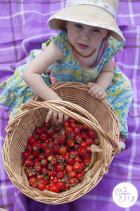 Strawberry Picking & a Picnic with a Difference - Our Strawberries