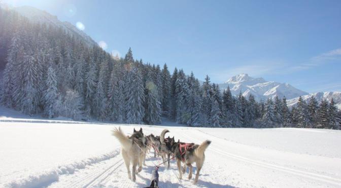 L'équipe d'Escapades nordiques recrute des mushers en Savoie pour l'hiver 2020-2021
