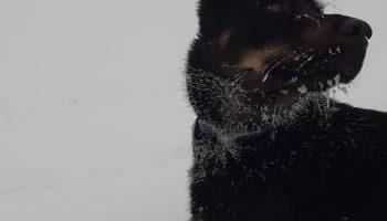 Joseph, éducateur canin, recherche un poste de musher/handler.