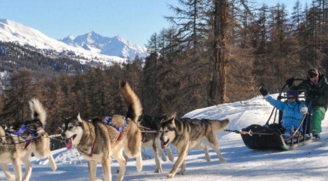 MUSHANDCO basé à Vars, dans les Hautes-Alpes, recrute pour la saison hiver 2021 – 2022