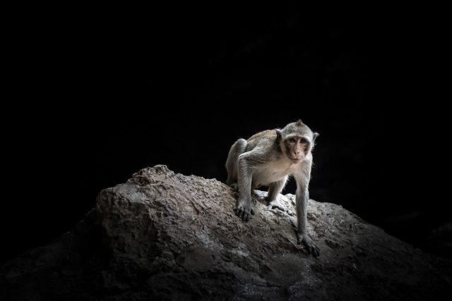 Un singe assis sur un rocher dans une grotte