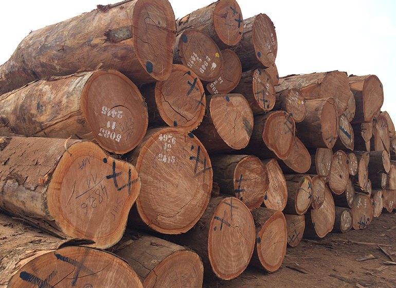 Cémac : l'interdiction d'exportation des grumes reportée à 2023