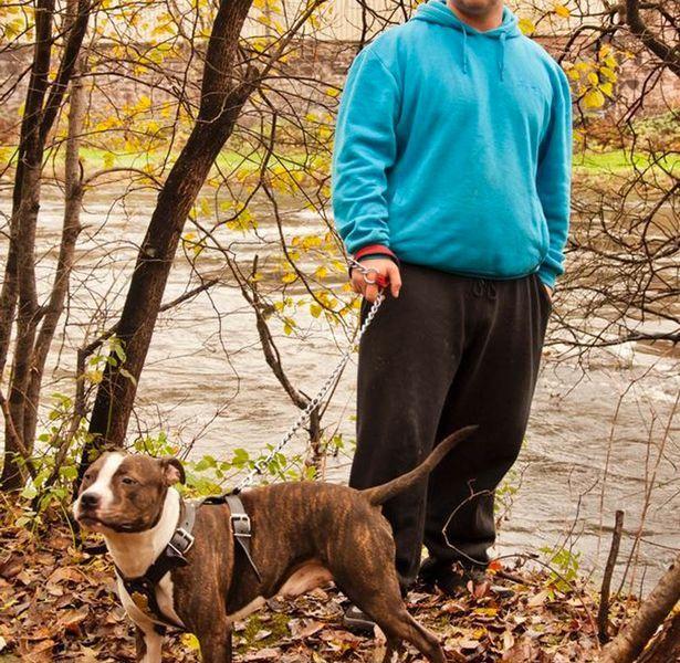 Chronique de Terrier N°2 : Corbin, le staffie-héros des rivières glacées