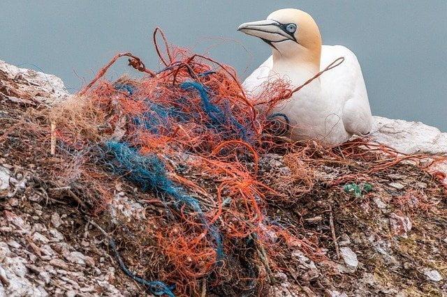 Da Nord a Sud: le spiagge plastic free d'Italia