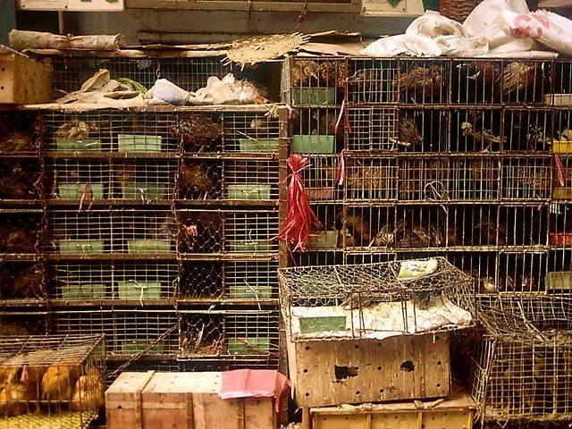 L'ONU propone un divieto per i mercati di animali selvatici