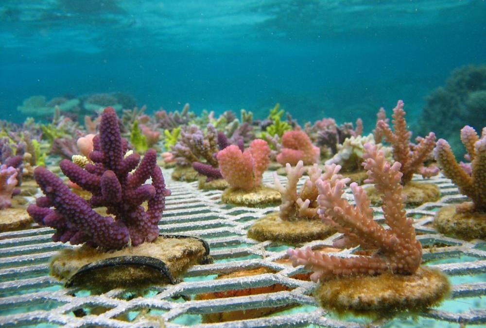 Happy World Reef Day, persi l'80% dei coralli