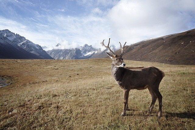 Alaska, la foresta del Tongass in pericolo
