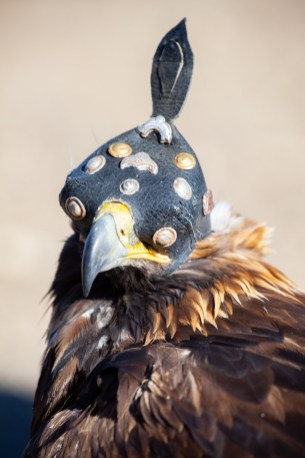 An eagle with a kind of helmet to cover their eye