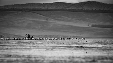 Steppes mongoles