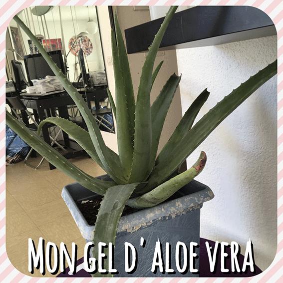 Comment je fabrique mon gel d'Aloe Vera