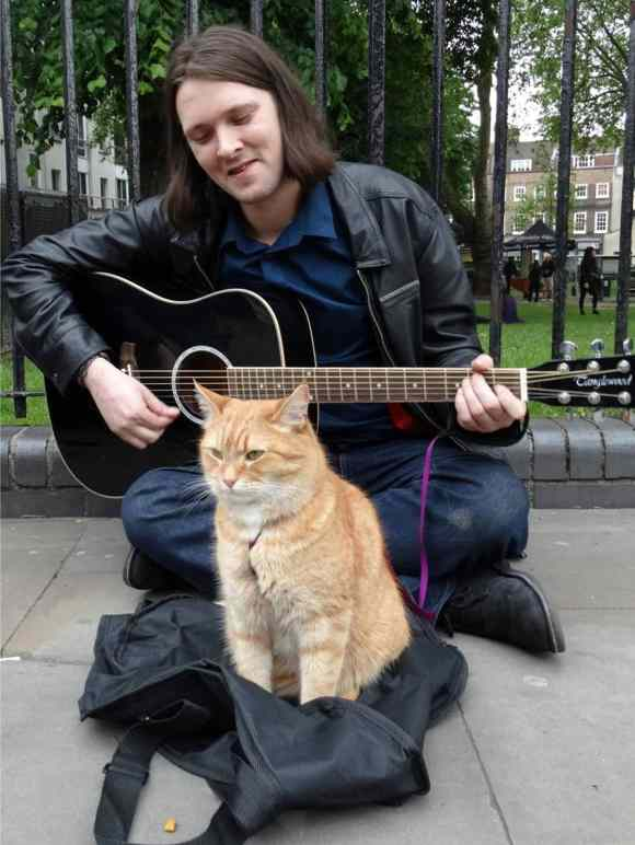 homeless2 768x1024 - Un chat des rues nommé Bob