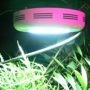 LED Grow Light UFO 90 Watt in Aktion