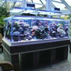 akvarium-telikert-terasz Akvárium ledvilágítás ötletek Tippek