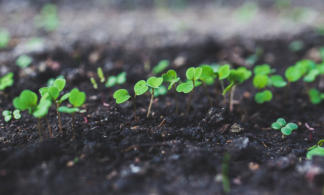 Starting seeds indoors in your LED Habitat or Habitat Pro