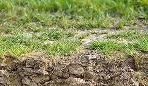 soil in DFW lacks moisture