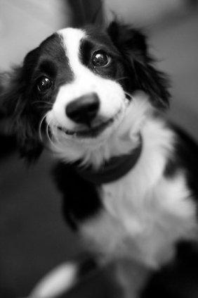 """Smiling Dog"" by Benjamin Liew"
