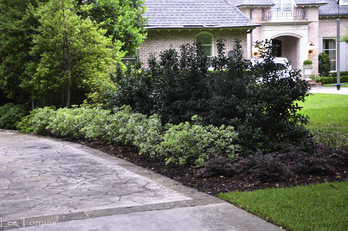 Best Shrubs For Texas Lee Ann Torrans Gardening