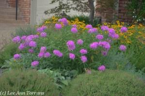Pocket Perennial Garden