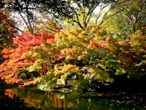 Fall_Japanese_Maples-3