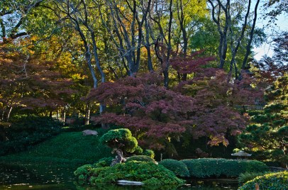 Fall_Japanese_Maples